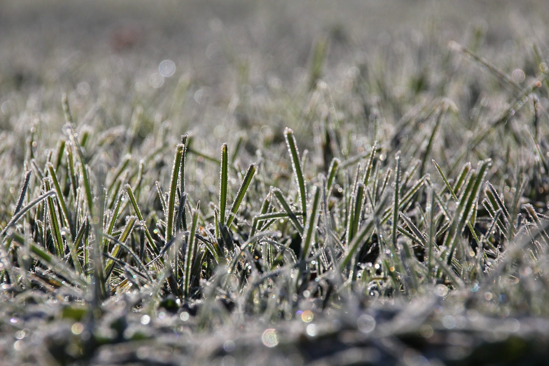 Read more about the article Artificial Grass in Winter
